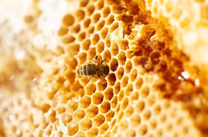 Bienenfink Honig